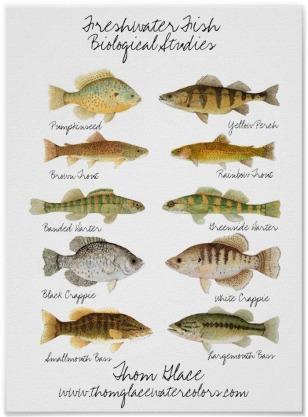 Affiche poisson eau douce