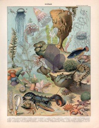 Affiche poisson vintage