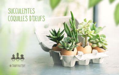Plante boite oeuf