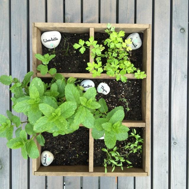Jardinière herbes aromatiques
