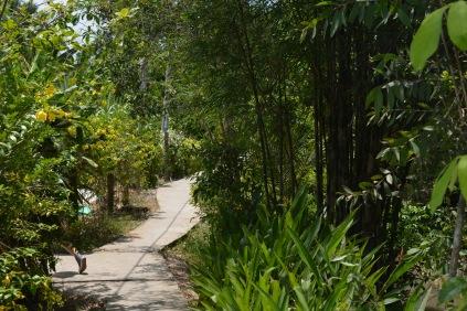 Sentier Vietnam