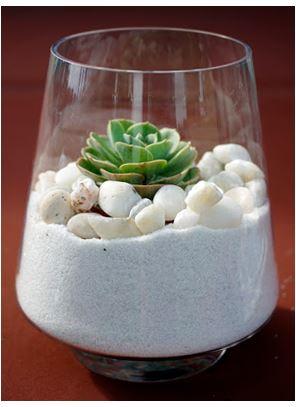 Succulente sable