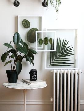 plante-sous-verre