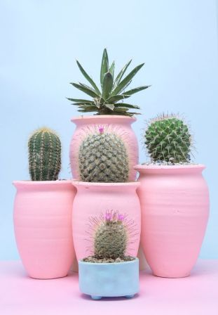 pot-cactus-rose