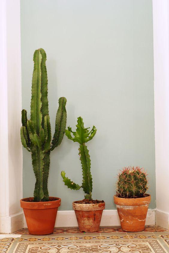 cactus pot terre. Black Bedroom Furniture Sets. Home Design Ideas
