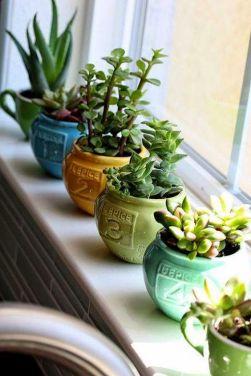 succulentes-vaisselle-vintage
